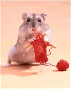 Knitting Pattern For Hamster Jumper : Gerbil Knitting: Year of the Rat (2008)